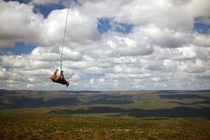 20 Photographs: Rhino Gets Airlifted By Helicopter To New Enclosure In South Africa