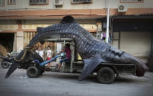 20 Photographs: A fisherman transports a dead whale shark in Yangzhi, China