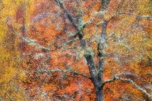 """Wild Woodswinner Peter Cairns, """"Autumn Jewels"""", Woodland, Cairngorms, Scotland."""