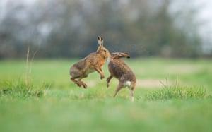 "British Seasons winner Andrew Parkinson, ""Hares"" Derbyshire, England"