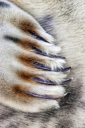 Close to Nature category, Grey Seal Claw taken by Jim Greenfield in Lincolnshire