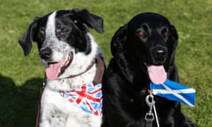 Dogs wearing a union flag and a Scottish Saltire at the Birnam Highland Games in Scotland.