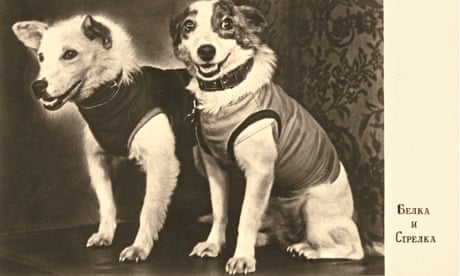Image result for belka and strelka space dogs