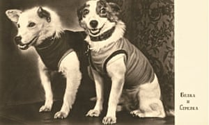 Belka and Strelka at their first press conference
