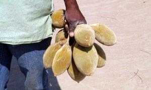 Baobab in Malawi