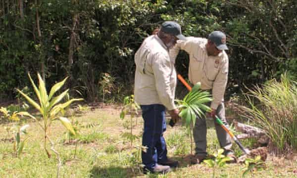 Girringun rangers plant native species as part of the revegetation program run by the Girringun Aboriginal Corporation in Cardwell, Queensland