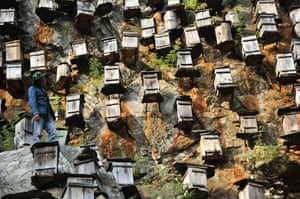A beekeeper checks the beehives.   Hundreds of beehives hang from a mountain in Shennongjia nature reserve, Hubei province, China   Some 700 wooden beehives are seen hanging from a cliff 1200 meters above sea level in the Shennongjia nature reserve, Hubei province, China. The hives are located in a conservation area and are hung on the side of a cliff to imitate the insects' natural habitat in hopes of attracting wild bees.