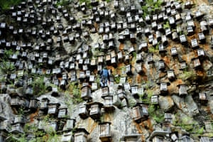 A beekeeper checks beehives on September 06, 2014 in Shennongjia, China.