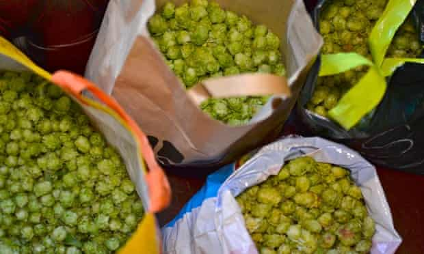 Hops for beer at Palace Pint in London