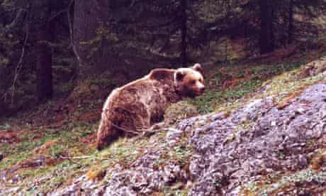 Daniza the bear photographed in 2000.