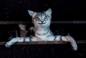 Gymnastic cat