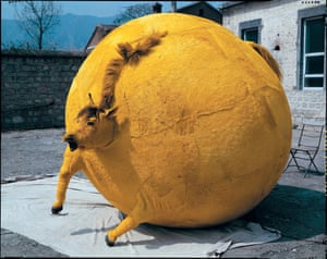Inflated horse