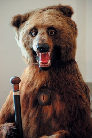 Brown bear with walking stick