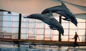 Dolphins at the National Aquarium, Baltimore. The facility ended its dolphin shows in 2012 and is now looking at retiring them