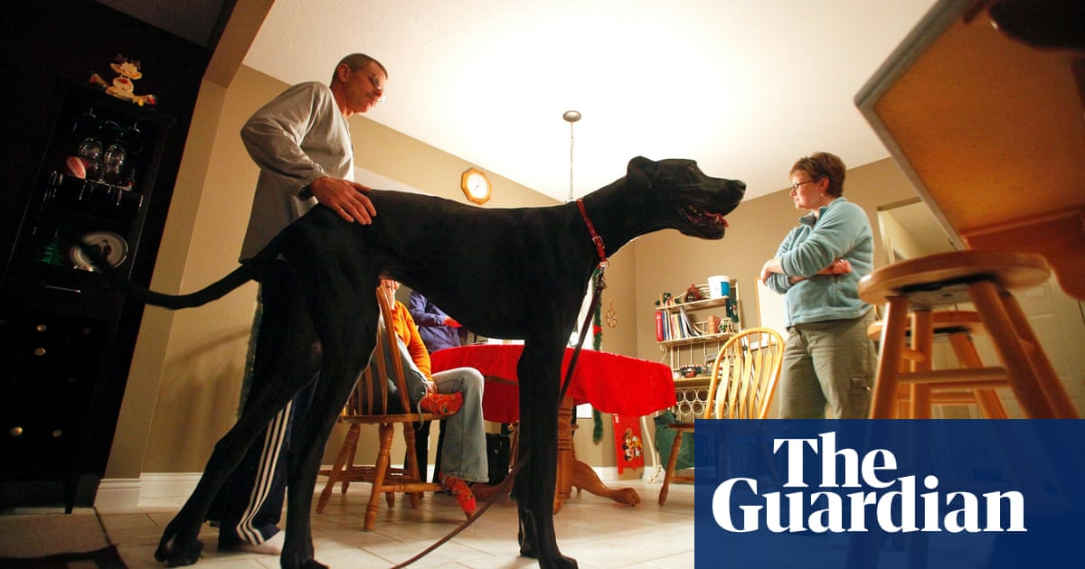 World's tallest dog Zeus - in pictures | Life and style