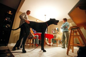 Owner Kevin Doorlag pats Zeus, then aged two, as he and Denise Doorlag (R) listen to Julie Wojtaszek, a dog trainer from Bark Busters Home Dog Training at their home in Otsego, Michigan