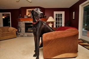 Zeus sits in a love seat at the family home