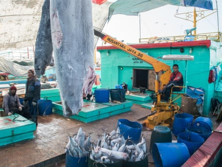 Fishermen offload frozen sharks at Benoa Harbour in Bali. The shark flesh is processed at the port to make meatballs for bakso, a popular soup dish. The valuable fins are destined for restaurants and banquet tables.