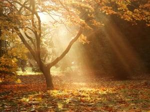 Morning rays at Westonbirt Arboretum near Tetbury in Gloucestershire