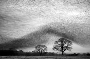 Starling wave by Danny Green