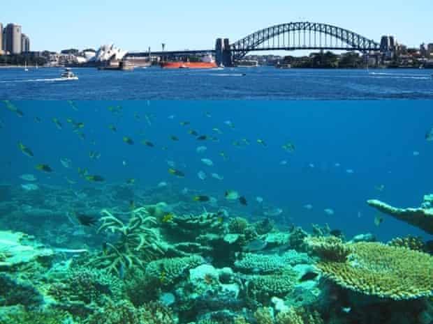 Sydney tropical
