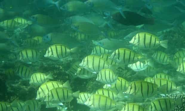 Algae-eating fish