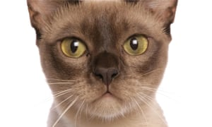 Are you stressing out your cat? How to spot the signs | Life
