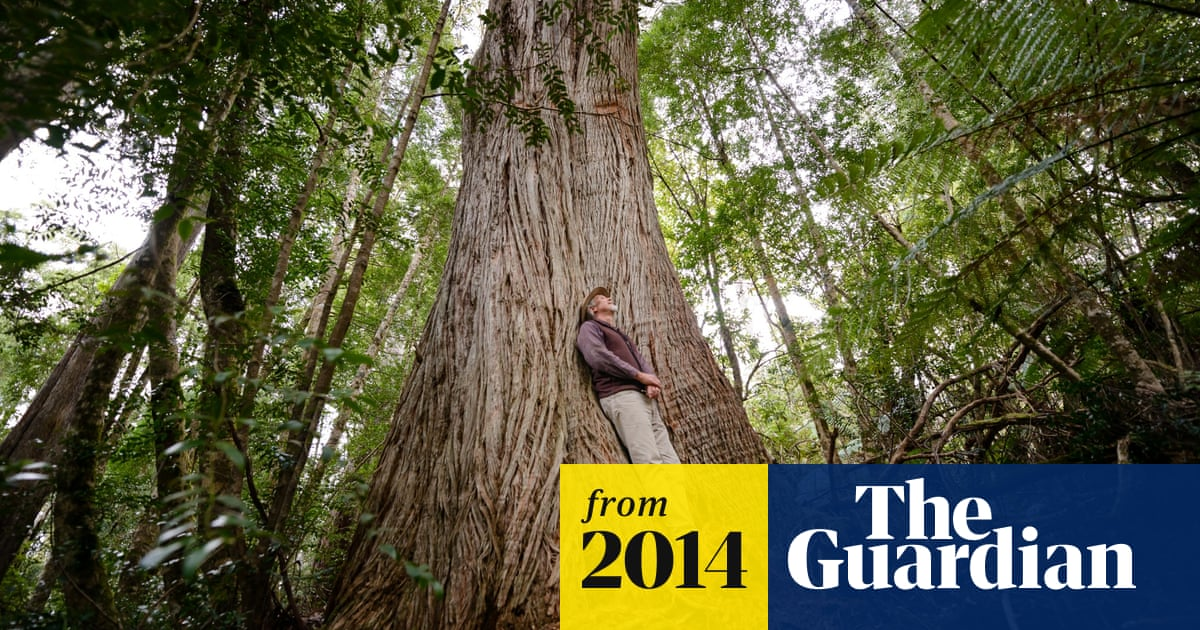 War and peace – and war again? The battle for Tasmania's ancient