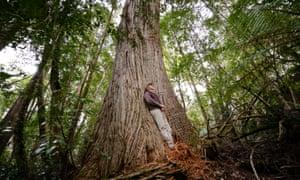 Tasmania Wielangta forests