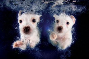Pringles and Pickme look as if they are forming a canine synchronised swimming team