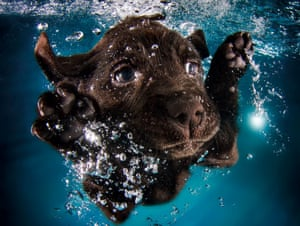 Ruger puts his paws up in an air of aquatic surrender