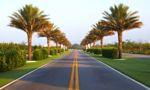 Road palm trees