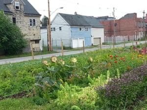 Wilson Street urban farm in Buffalo