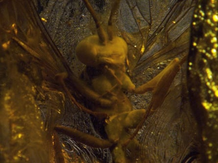 Historical curiosity … an insect in amber, from a film by Pierre Huyghe.