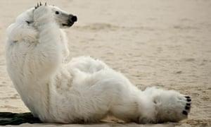 polar bear beach pushups