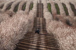 Almond blossom: 2015 Society of American Travel Writers Photo Competition