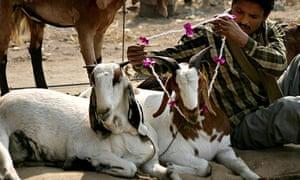 Goat vendor in India