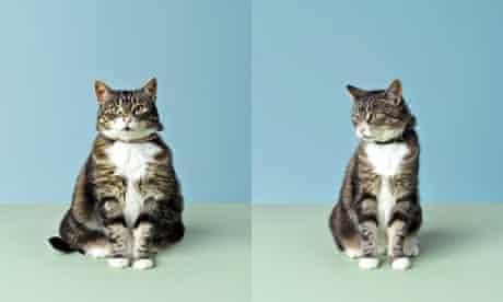 A fat cat and a skinny cat