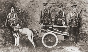 Dogs were often used by the British Army to pull machine guns.