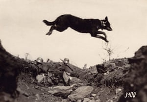 A dog jumps over a trench, in which German soldiers are pictured in fighting position. Dogs were often used to carry messages at the front.