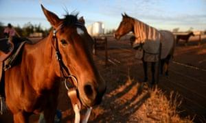Horses on a property