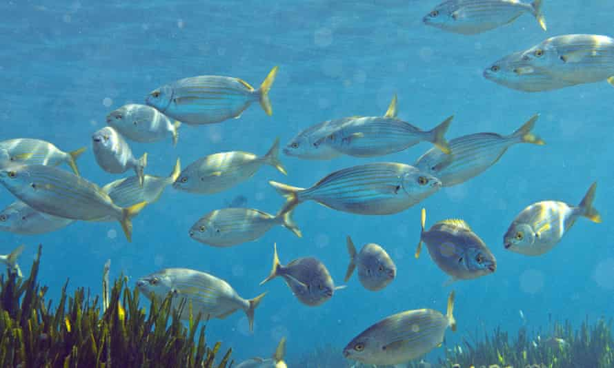 Global warming could lead to smaller fish, according to the University of British Columbia.
