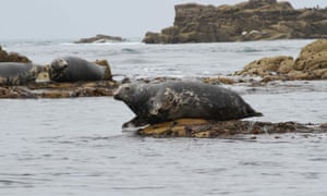 Seals on the Isles of Scilly