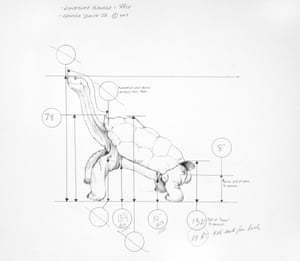 Sketch of Lonesome George's postmortem position