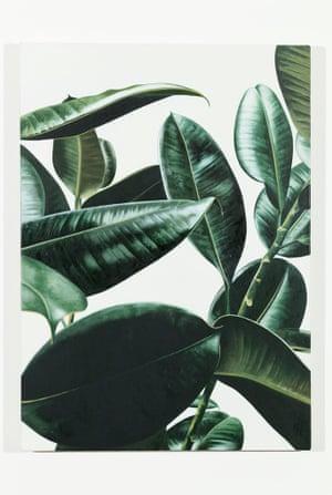 Oliver Osborne, Rubber Plant, 2013