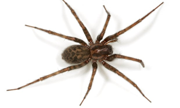 hairy scary and lethal how dangerous are britain s household