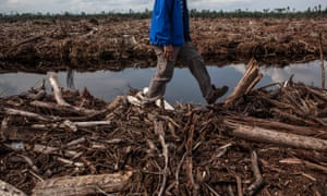Deforestation in Indonesia. The Green Climate Fund has said the Australian government has no say in how its donation will be spent, but its priorities coincide with Australia's, including rainforest protection and the Asia Pacific.