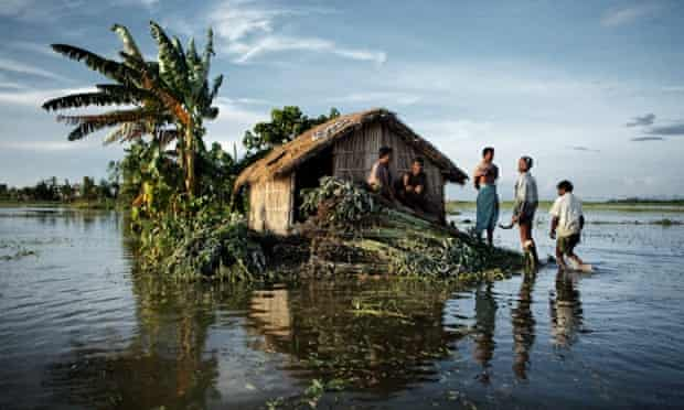 Jute harvesters in the floodwaters of the surging Brahmaputra river in Bangladesh.