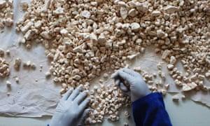 A worker sorts baobab fruit in Dakar.