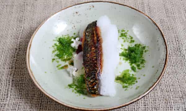 mackerel at Norse